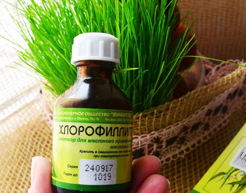 «Хлорофиллипт»: цена вопроса — копейки! 15 проверенных временем рецептов.