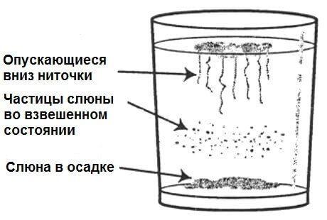 Тест на наличие грибка кандида в организме и способы лечения