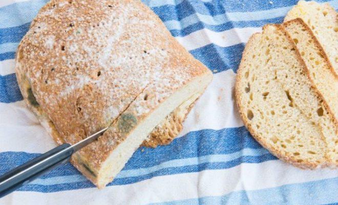 Плесень на хлебе: срезать или не срезать?