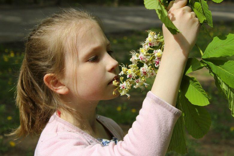 Лечебные свойства цветков каштана