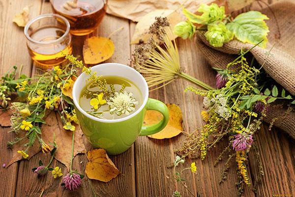 Травы, помогающие похудеть