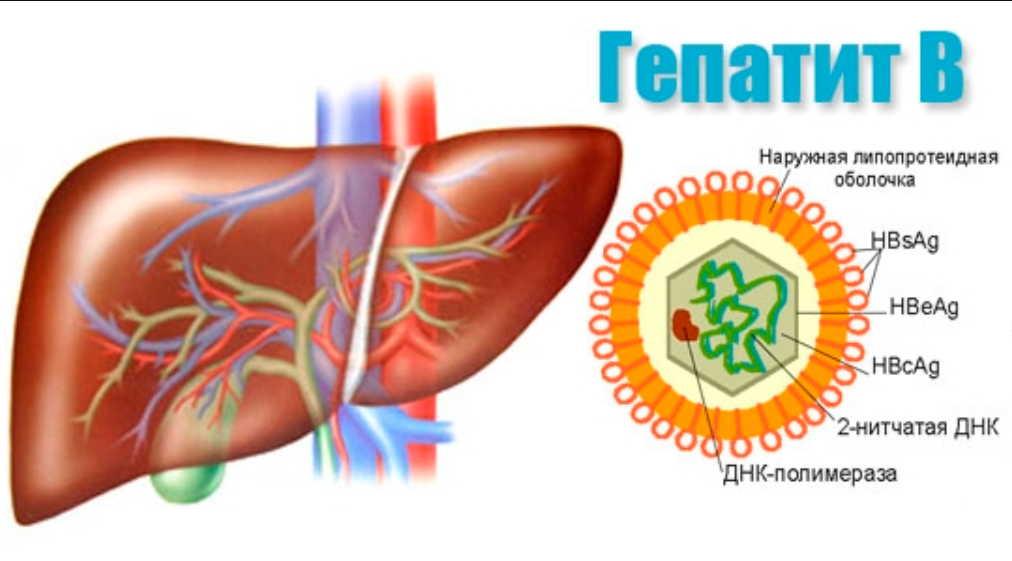 Гепатит В: оздоровление народными методами