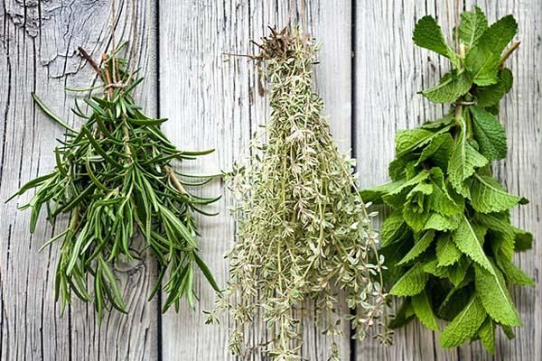Как правильно заготавливать травы