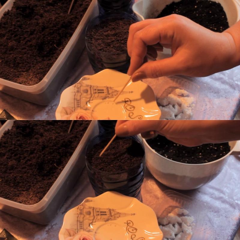 Добавляю одну-две таблетки активированного угля, бутылку затягиваю пленкой… Способ для ленивых! И перцы, и петрушка, и базилик таким способом растут как на дрожжах