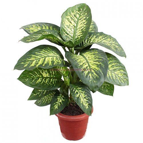 Домашние растения, которые могут причинить вред здоровью