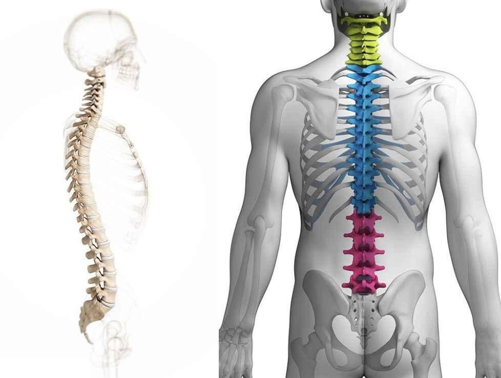 Восстановление осанки — возвращение здоровья. Почему от неправильной осанки страдает поджелудочная железа и выработка инсулина?