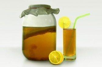 Поселите дома чайный гриб!