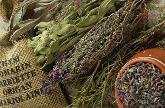 Народные средства и травы от бессонницы