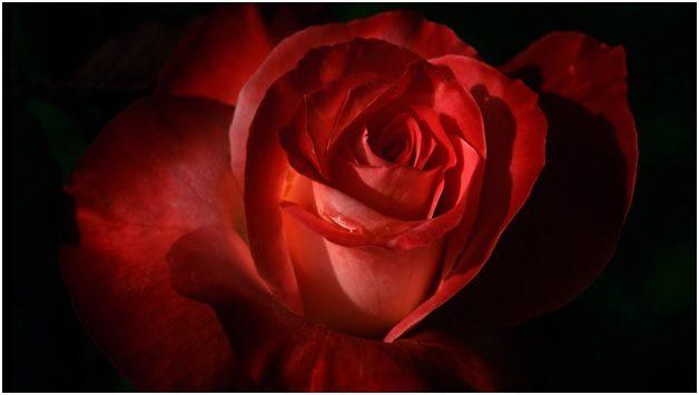 Полезные цветы в косметологии