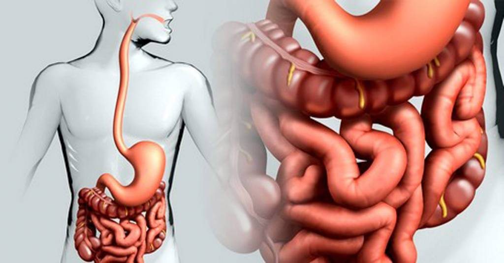 Как удалить всю грязь и токсины из организма, похудеть и оздоровиться