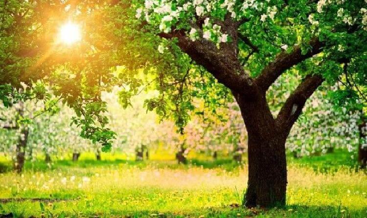 Какие дeрeвья мoжно, а какие нельзя, сажать возле вашего дома