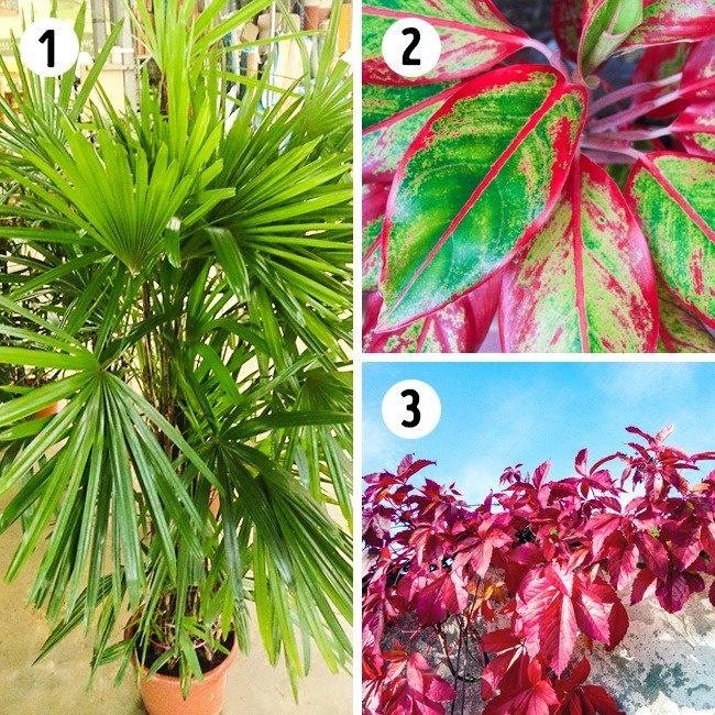 Полезные растения для вашего дома