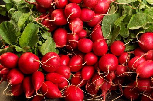 Редиска – весенний кладезь витаминов