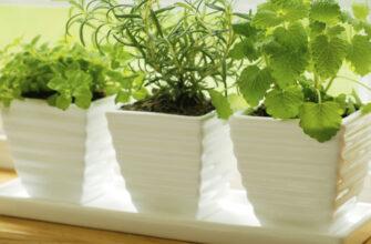 Эти 8 полезных трав можно круглый год растить на подоконнике. Берите на заметку!